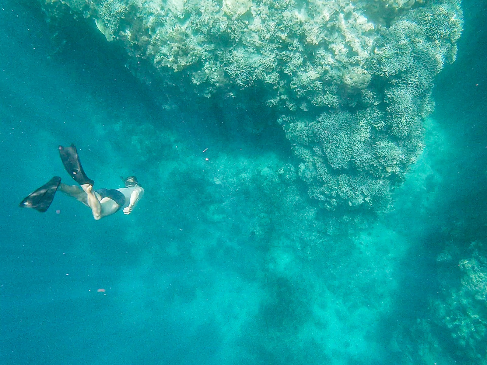 getting to the bottom of freediving